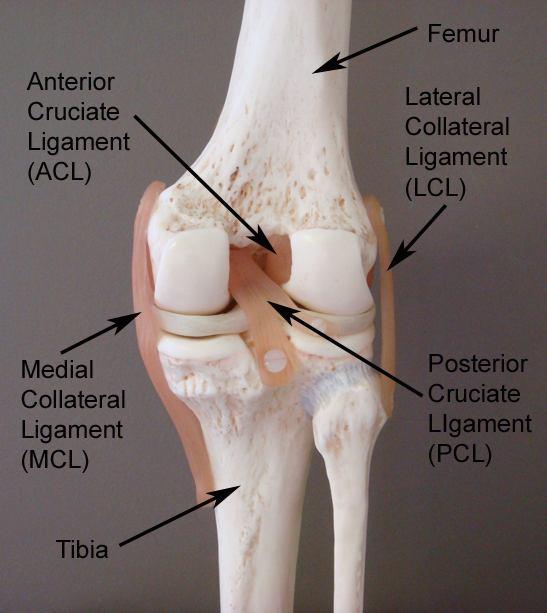 Ozljede stražnjeg križnog ligamenta