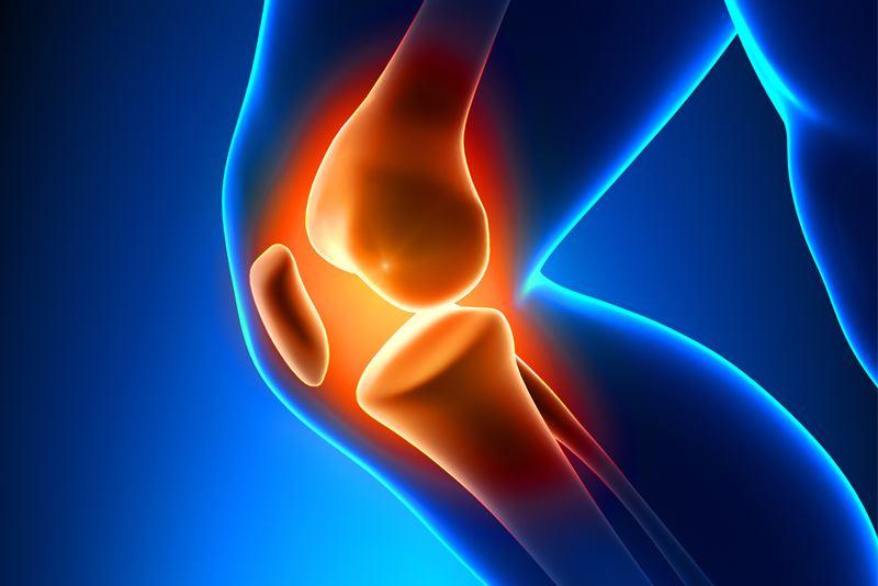 Anatomija koljena
